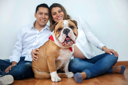 Beautiful bulldog with his family sitting on the floor Stock Photo