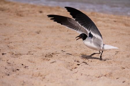 Seagull landing at the beach