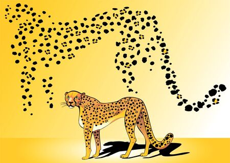 Cheetah - the fastest animal in the world Stock Vector - 9723090