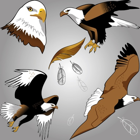 set of stylized images of white-tailed eagle in different versions Vector