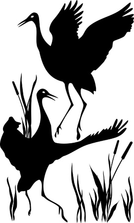 silhouettes of couples cranes that dancing mating dance