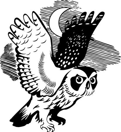 black beak: owl silhouette in the moonlight on the isolated background Illustration