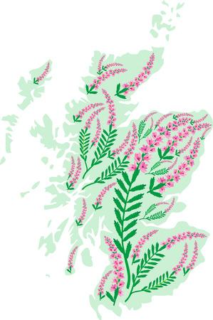 Vektor-Hintergrundbild Karte von Schottland mit Heidekraut Blumen