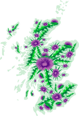 thistle: Vector image background map of Scotland with thistle flowers