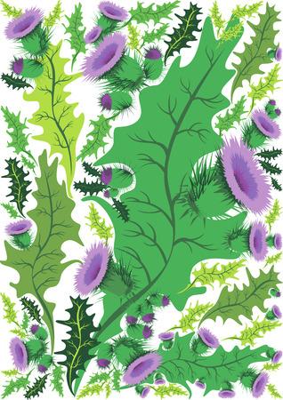 ostrożeń: grafika wektorowa piękne dekoracyjne granicy kwiatów ostu Ilustracja