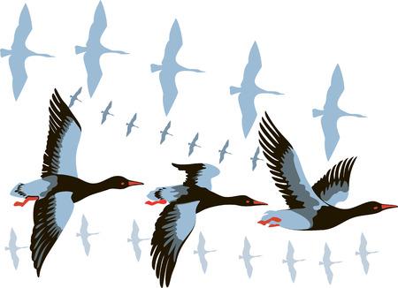 野生のガチョウの飛行の群れのベクトル画像  イラスト・ベクター素材