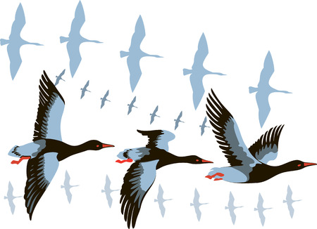paiting: vector image of a flying flock of wild geese