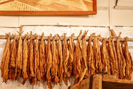 Hojas de tabaco colgando de un palo largo de madera, en una secadora de un pueblo Foto de archivo - 68204348