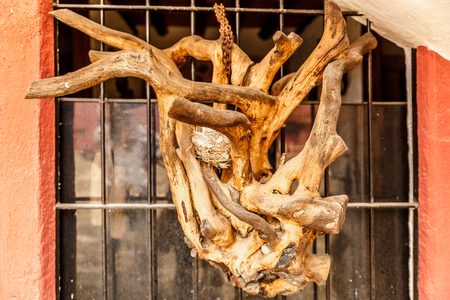 Piece of an imposing branched branch, chained to a window Stock Photo