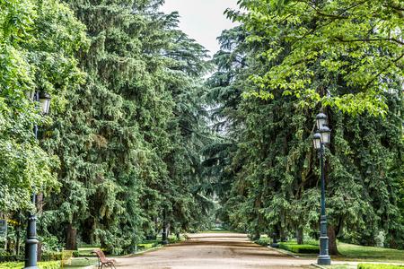 arboles frondosos: Nice walk with leafy trees on the sides, in spring Foto de archivo