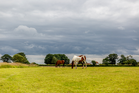 Two horses of different color are grazing a beautiful day on a farm in England, United Kingdom