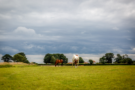 Two race horses on a beautiful and green farm in England