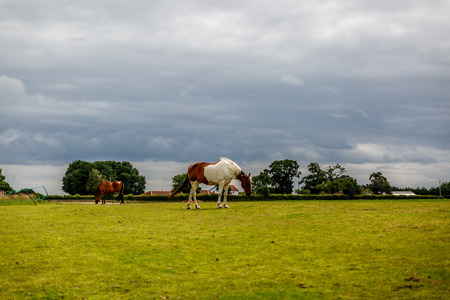 Beautiful landscape of a farm with two horses of different color, England