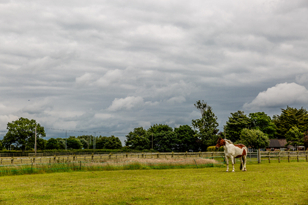Cute horse in white and brown colors on a large farm in England, United Kingdom Stock Photo