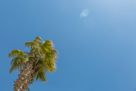 View of a palm tree with a lovely sunny sky background, Spain Imagens