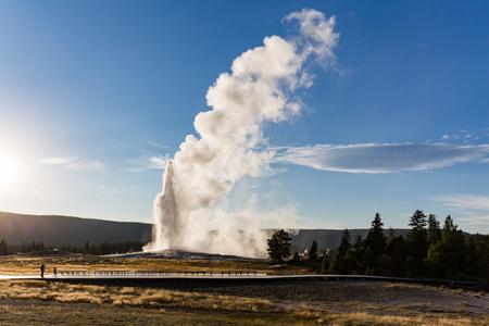 faithful: Old Faithful Geyser in Yellowstone National Park, USA