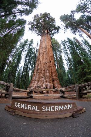 sequoia: General Sherman in Sequoia National Park Stock Photo
