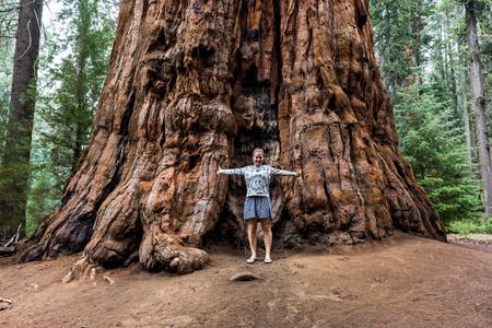 sequoia: Girl in Sequoia National Park Stock Photo