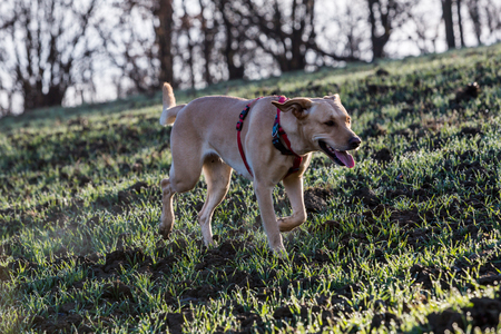 cur: Brown mixed shelter dog Stock Photo