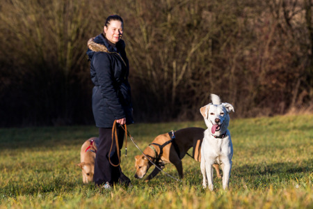 instructing: Woman instructing dogs outside Stock Photo