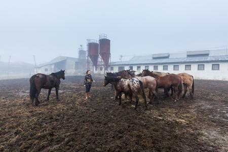 periphery: Girl feeding horses on a farm in Slovakia