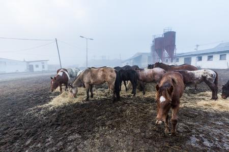 periphery: Horses in a farm in Slovakia Stock Photo