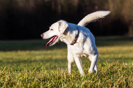 cur: White shelter dog