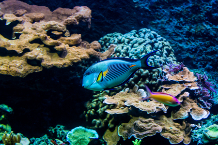 colorful fishes: View of colorful fishes in an aquarium in a zoo