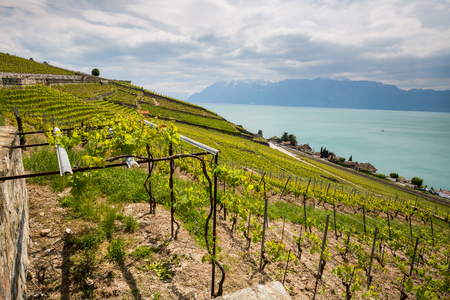 schweiz: LAVAUX, SWITZERLAND - MAY 23, 2015: View of the vineyards of Lavaux (Vilette) on May 23, 2015. Lavaux consist a lot terraced wineyards that stretch for about 30 km along the northern shores of Lake Geneva.