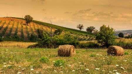Weergave van olijfbomen in de regio Maremma van Toscane Stockfoto