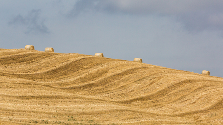podere: Empty mowed tuscan field with hay balls