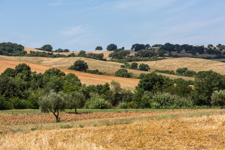 burned out: Overlook of a tuscan field and hills in Maremma region