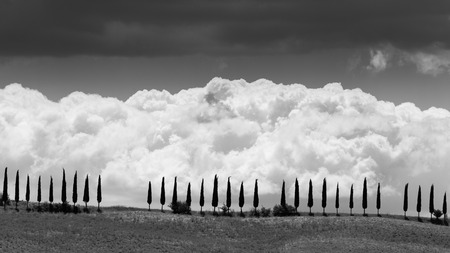 san quirico: SAN QUIRICO D ORCIA, ITALY - JULY 7, 2016: View of a farm fields in the tuscan region San Quirico d Orcia in Italy on July 7, 2016. This region is popular for tuscan style photographic motives.