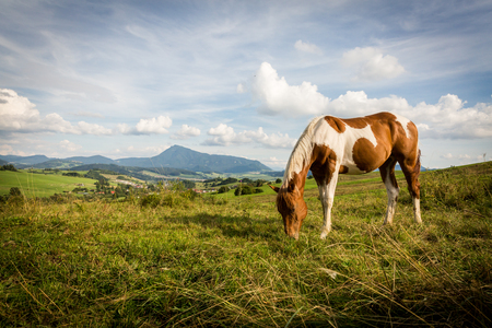 View of a horse on a meadow in the Slovakian region Orava