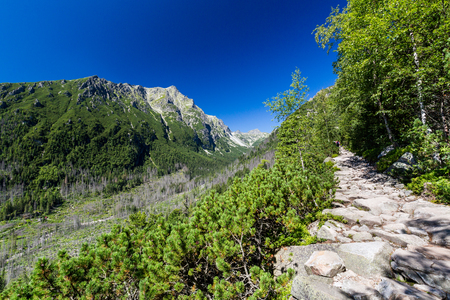 View of the nature along the hiking route to the Teryho Chata in the High Tatras in Slovakia