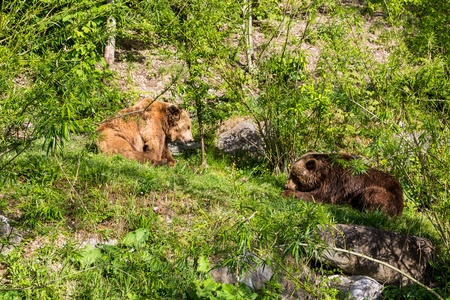 View of two bears in a park in the city of Bern in Switzerland
