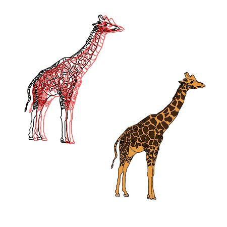 jirafa fondo blanco: Hermosas jirafas, 2 opciones, ilustración aislados en blanco