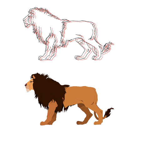 undomestic: Lion king. Vector isolated animal. 2 options