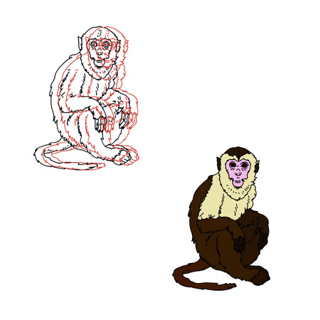 Capuchin monkey on a white background.  vector