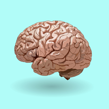 hypothalamus: realistic human brain on a blue background . side view. no trace