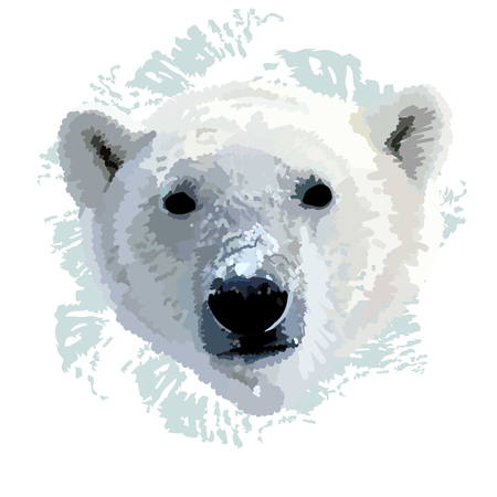 The head of a polar bear  realistic vector