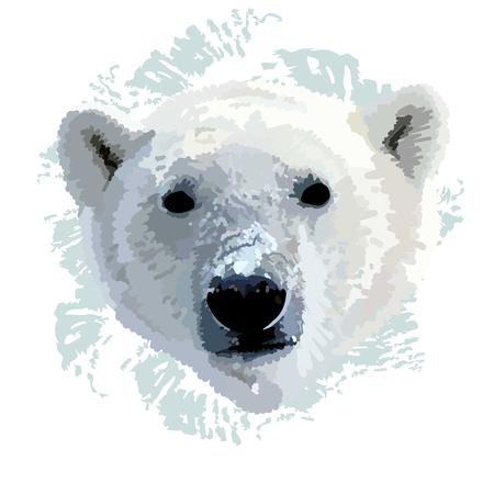 The head of a polar bear  realistic vector