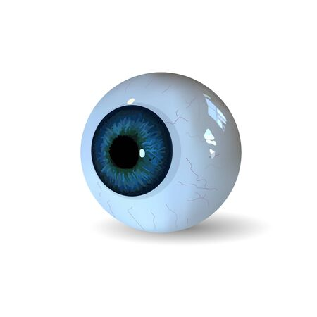 eye ball: Eye ball isolated on white background. Realistic Illustration