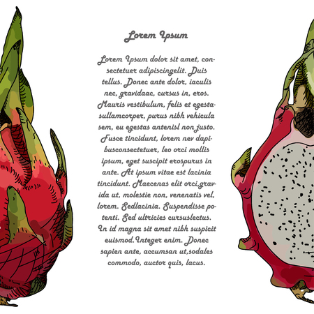 fruit du dragon: Dragon fruit or pitahaya. With text. Vector illustration. Hand-drawn fruit decorative element useful for invitations, scrapbooking, design.