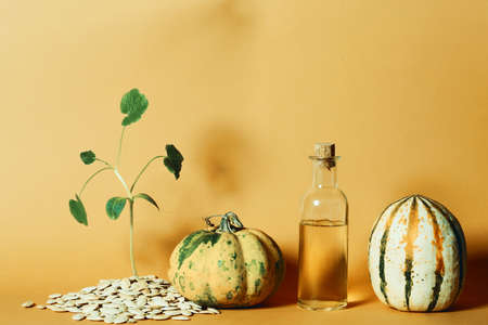 A bright, fresh pumpkin with a bottle of oil made from pumpkin seeds and a sprouting stem of seeds on a yellow background. Stock Photo