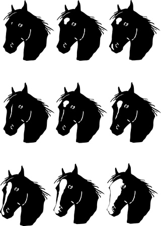 horse facial markings Illustration