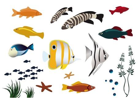 fresh water aquarium fish: colorful tropical fishes on white background Illustration