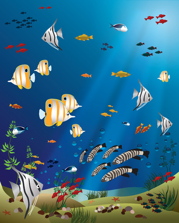 bottom: Leaflet width tropical fishes bottom of the ocean - vector illustration