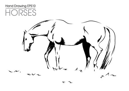 Hand drawn vector illustration from horse on meadow