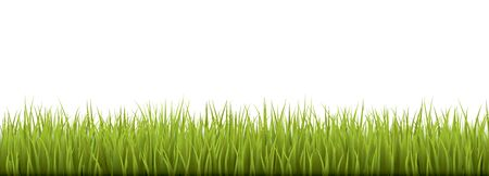 grasslands: Fresh realistic green grass - vector illustration